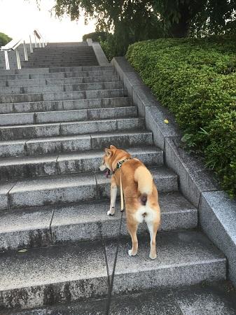 お散歩i.jpg