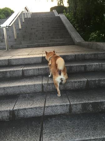お散歩j.jpg