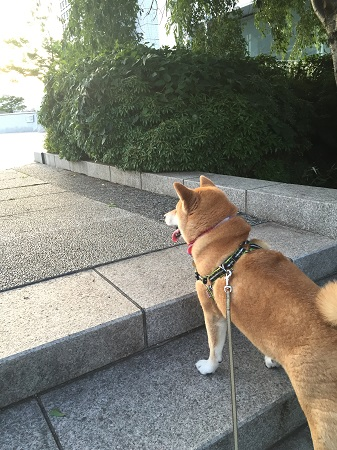 お散歩k.jpg