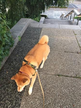 お散歩l.jpg