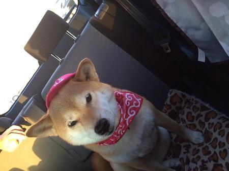 ピンク帽子d.jpg