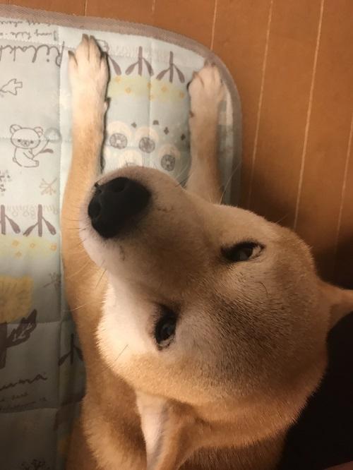ママっ子n.jpg