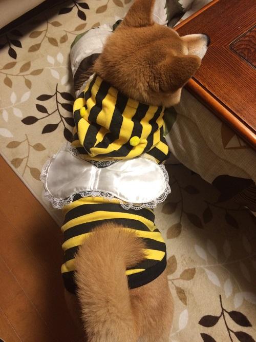 ミツバチa.jpg