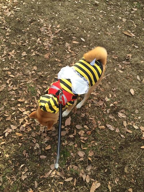 ミツバチb.jpg