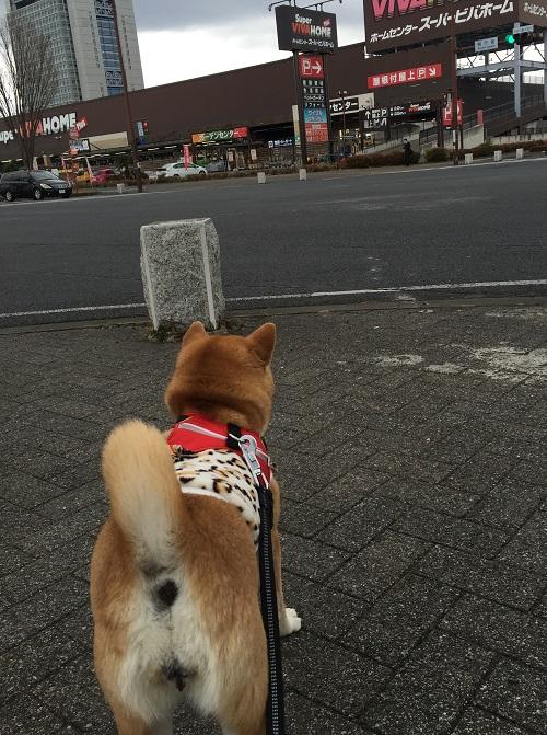 ロング散歩k.jpg