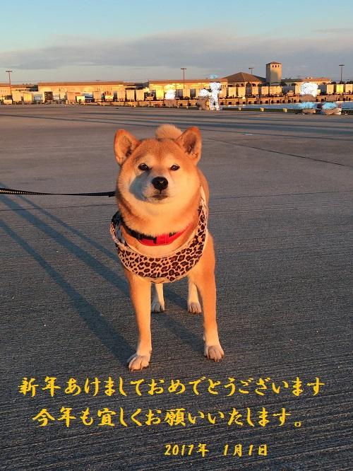 初日の出a.jpg