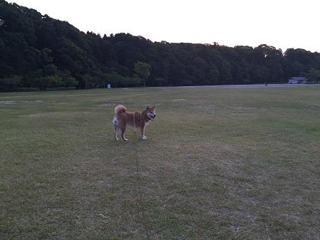 夕方散歩d.jpg