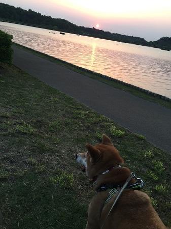 夕方散歩f.jpg