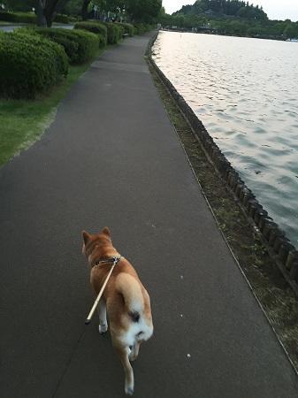 夕方散歩h.jpg