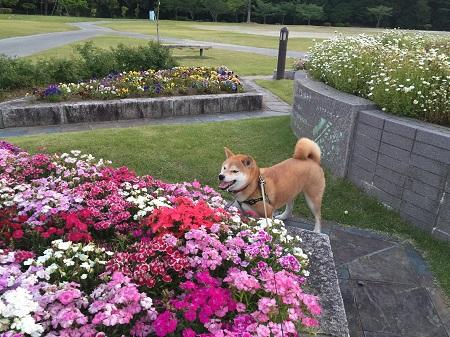 夕方散歩m.jpg