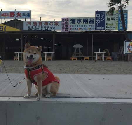 平日の海q.jpg