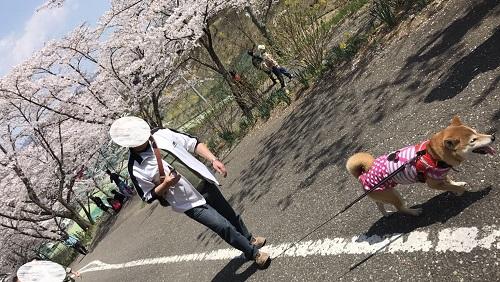 桜2章f.jpg