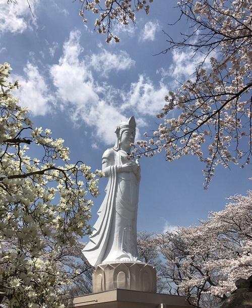 桜2章g.jpg