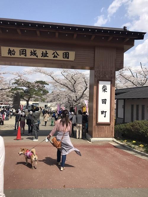 桜2章m.jpg