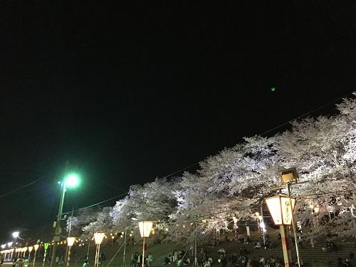 桜2章t.jpg