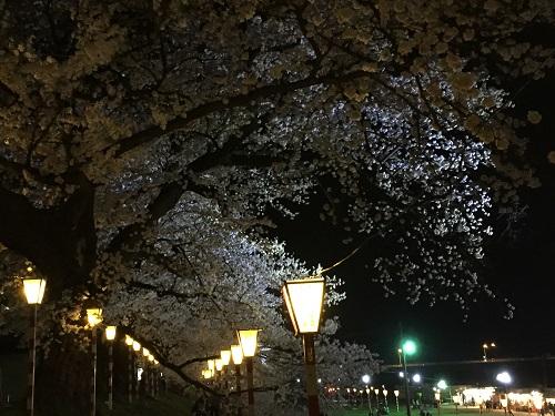 桜2章u.jpg