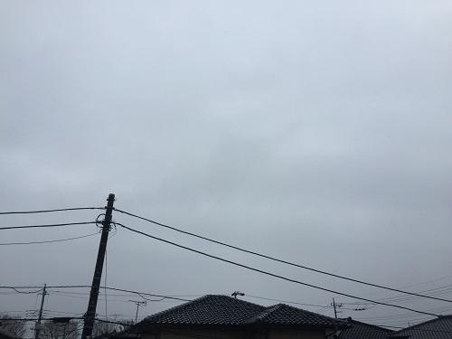 桜三昧a.jpg