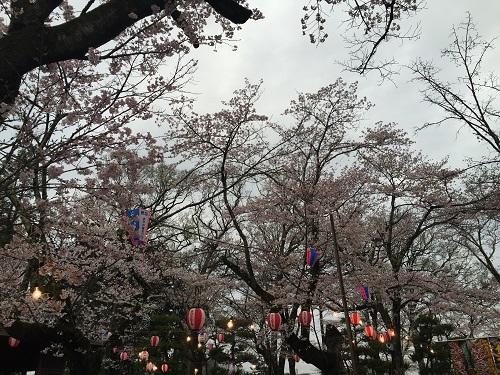 桜三昧d.jpg