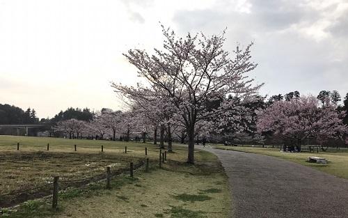 桜三昧j.jpg