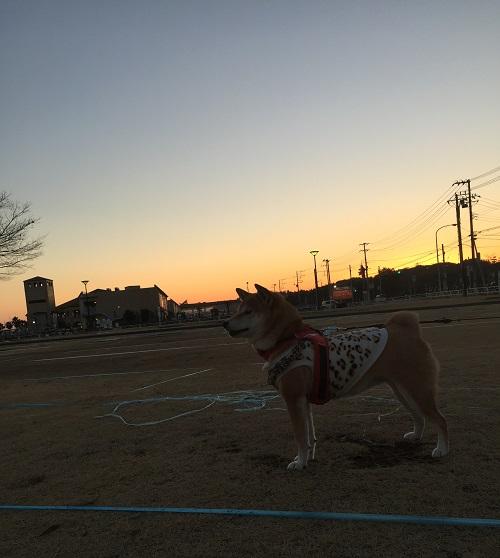 ちょい散歩b.jpg