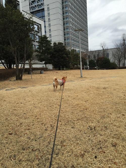 ロング散歩n.jpg