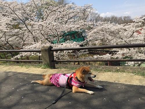 桜2章l.jpg
