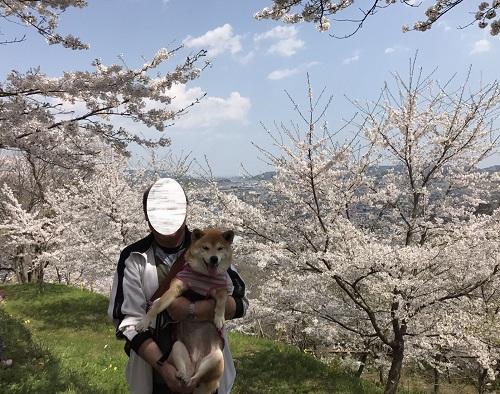 桜2章r.jpg