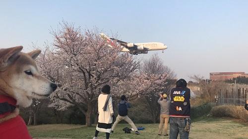 飛行機と1g.jpg